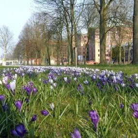 bollen ih gras - Deventer - OpenbareruimteDeventer.nl